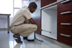 Pest Inspection, Pest Control in Highgate, N6. Call Now 020 8166 9746