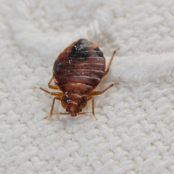 Bed Bugs, Pest Control in Highgate, N6. Call Now! 020 8166 9746