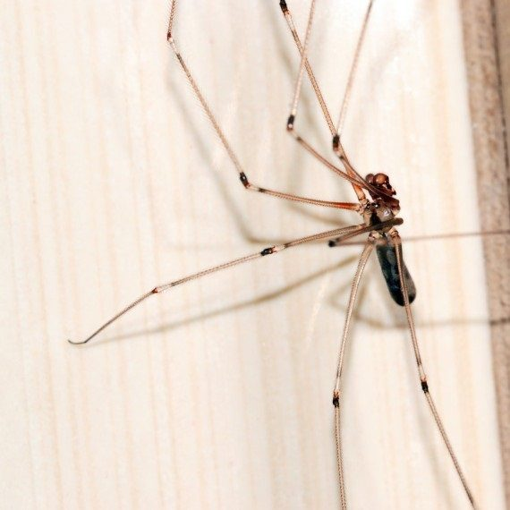 Spiders, Pest Control in Highgate, N6. Call Now! 020 8166 9746